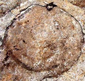 Supuesta marca del sombrero del apóstol en una piedra.