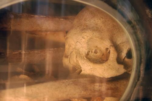 Detalle del cráneo del Santo en su urna de Troyes, Francia.