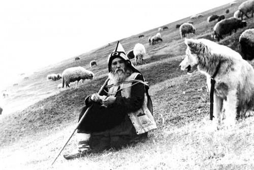 El padre Cleopa cuidando de sus ovejas.