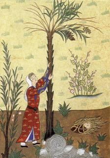 Tras parir a Isa, Maryam encuentra alimento en la palmera. Miniatura persa del Corán.